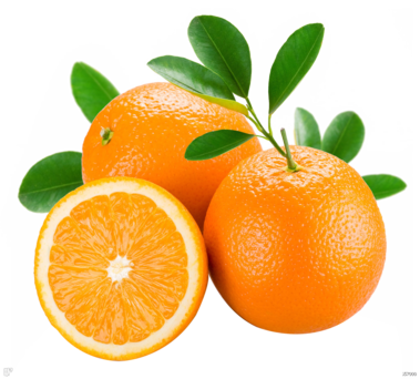 芸香科柑橘